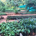 Develop Nursery for Forest Restoration